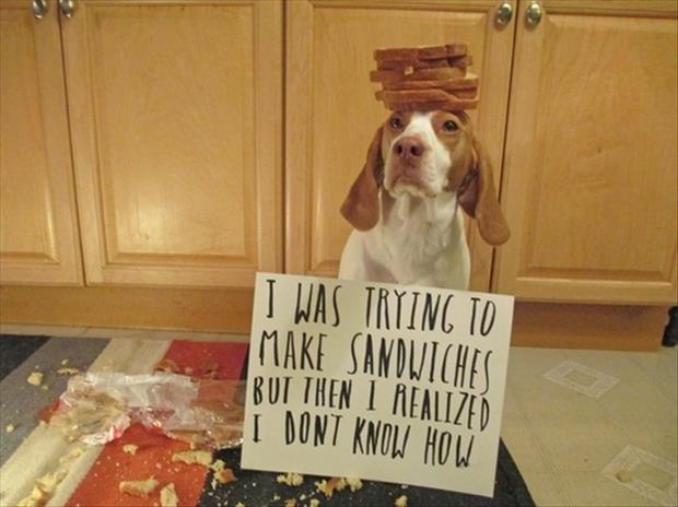 funny dog shaming making sandwhiches