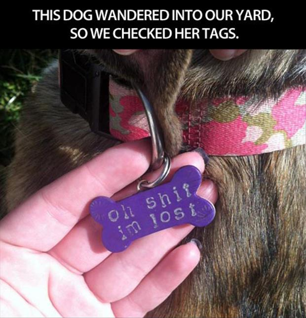 funny dog tags