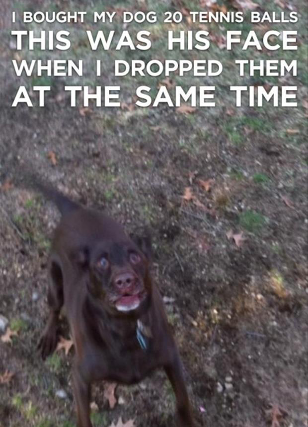 funny dogs and tennis balls