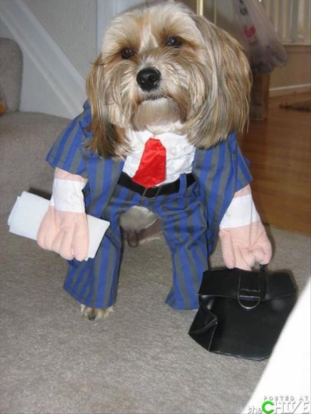 funny dogs dressed up (14)