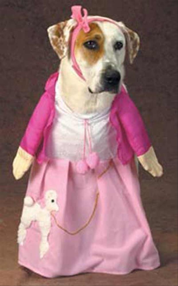 funny dogs dressed up (17)
