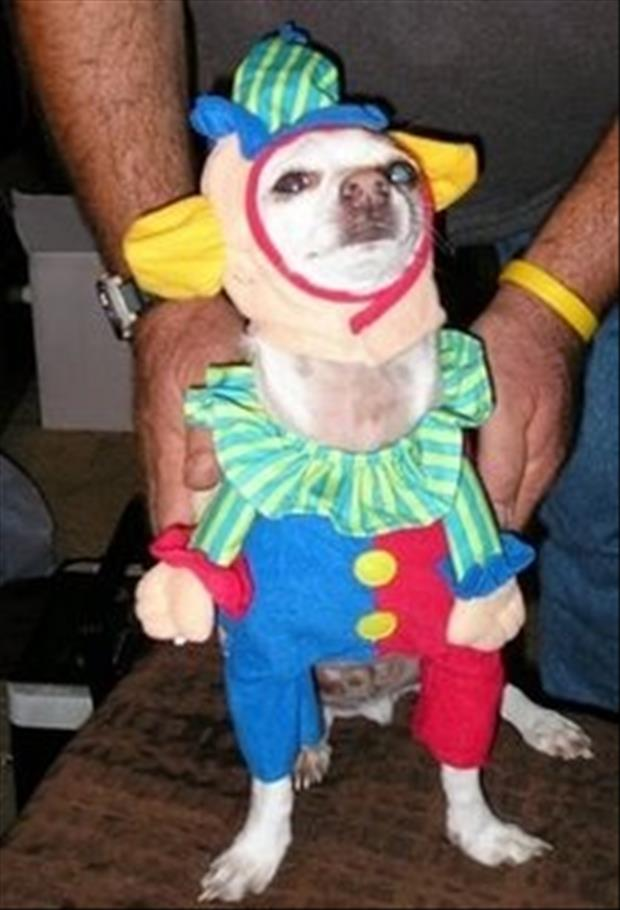 funny dogs dressed up (9)