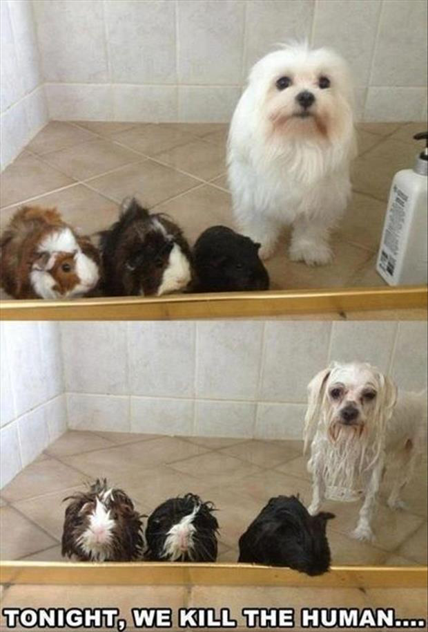 funny dogs taking showers