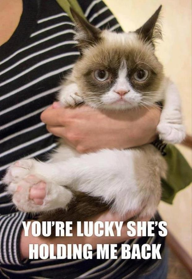 funny grumpy cat pictures - photo #1