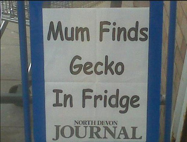 funny news headlines (15)