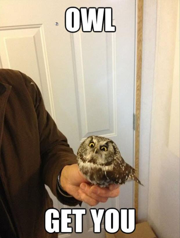 funny owl pictures
