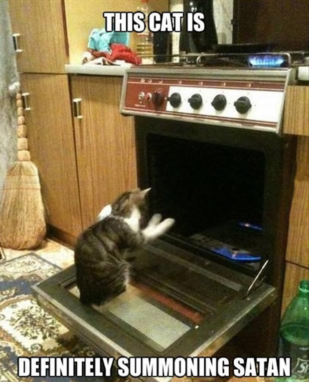 funny picture of a cat in the oven