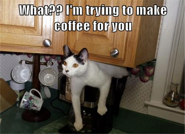 funny picture of cat making coffee