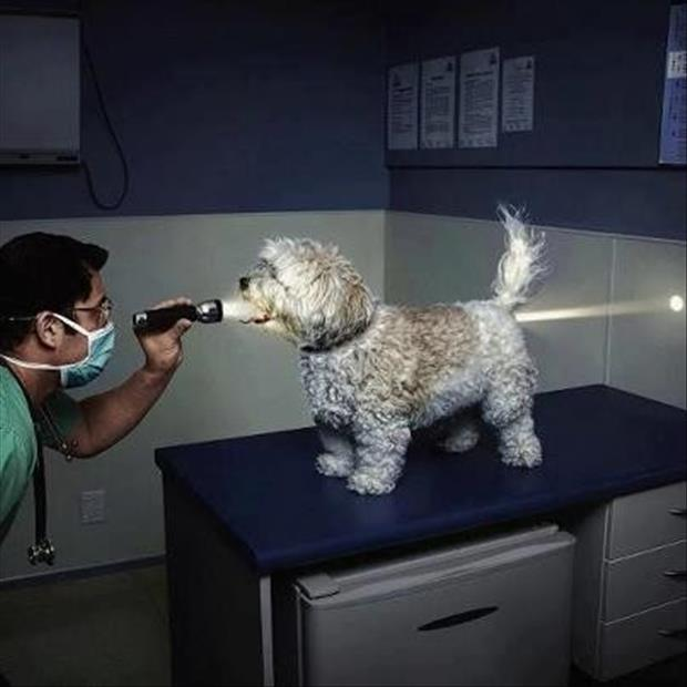 funny picture of dog at the vet