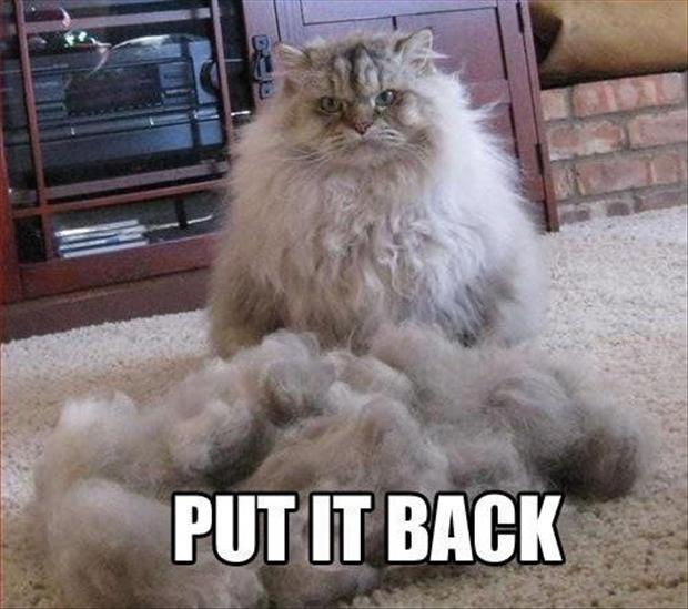 funny pictures, cat hair