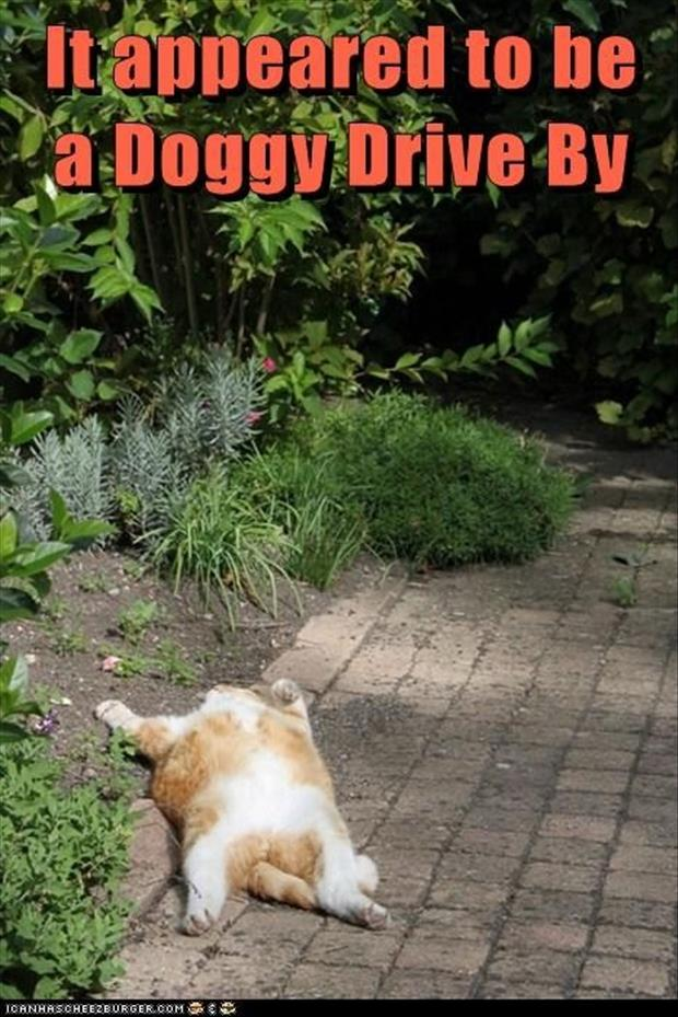 funny pictures dead cat