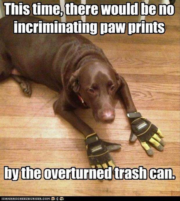 funny pictures dog wearing gloves
