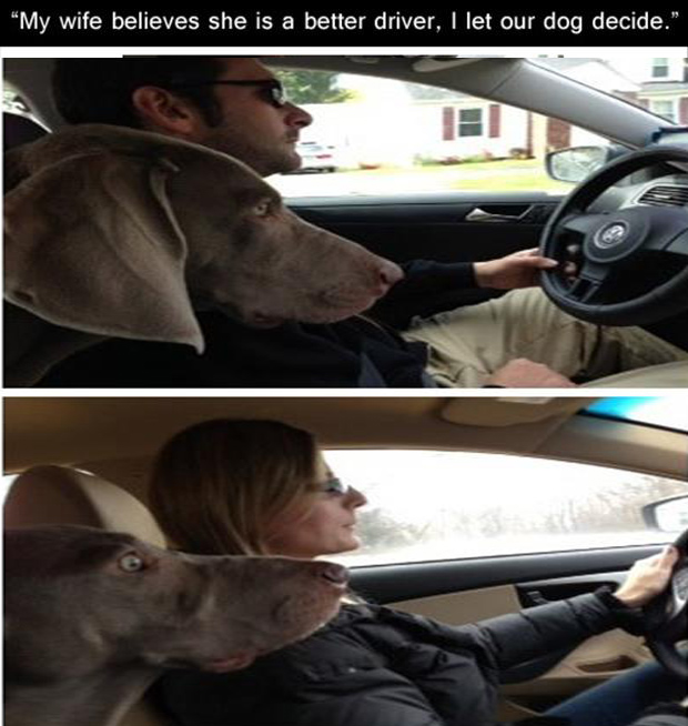 funny women are bad drivers dog pictures