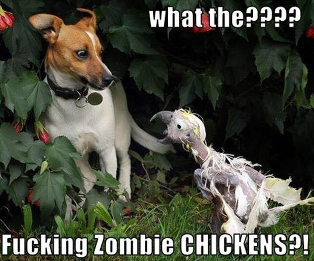 funny zombie chickens
