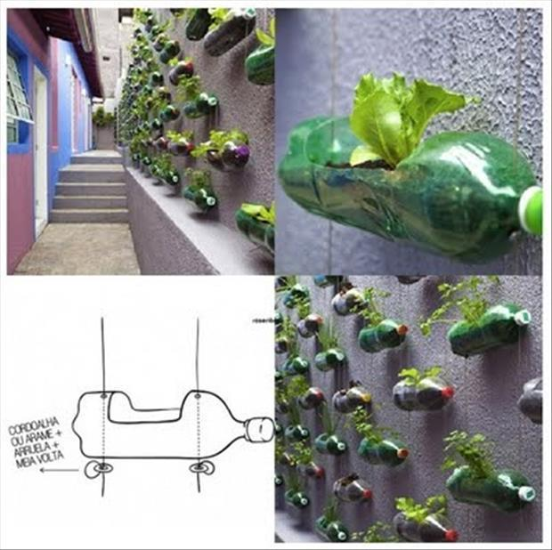 garden ideas wall