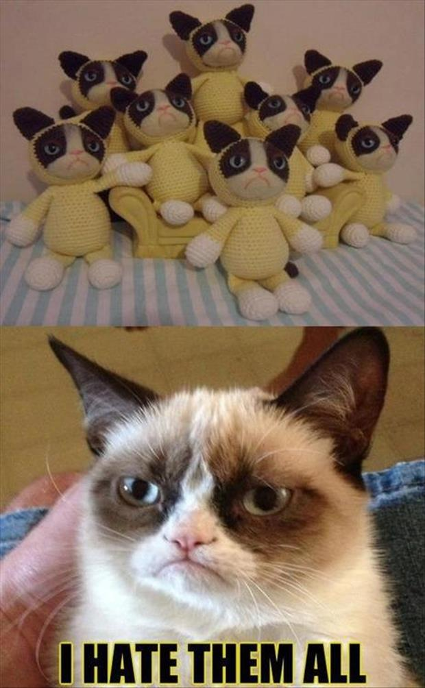 grump cat hates them all