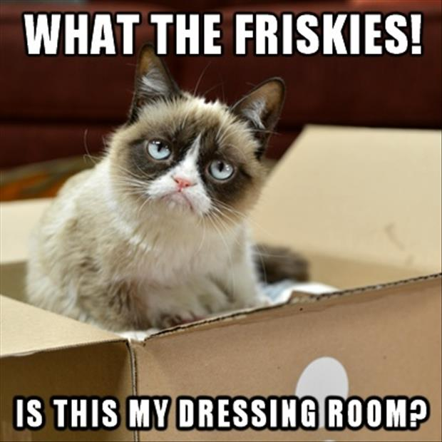 grumpy cat doing a friskies commercial behind the scenes
