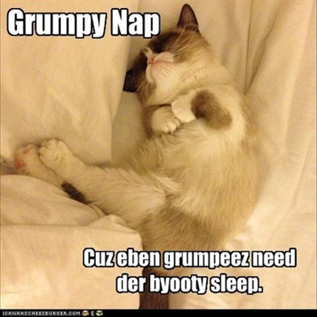grumpy cat takes a nap
