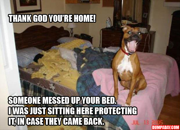 hey thank god you're home someone messed up your bed, I sat right here to protect it in case they came back