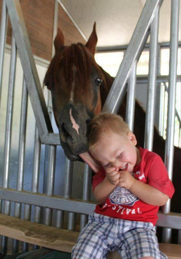 horse licking baby