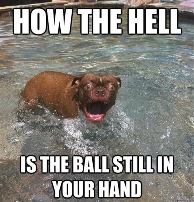 how the hell is the ball still in your hand funny dog pictures