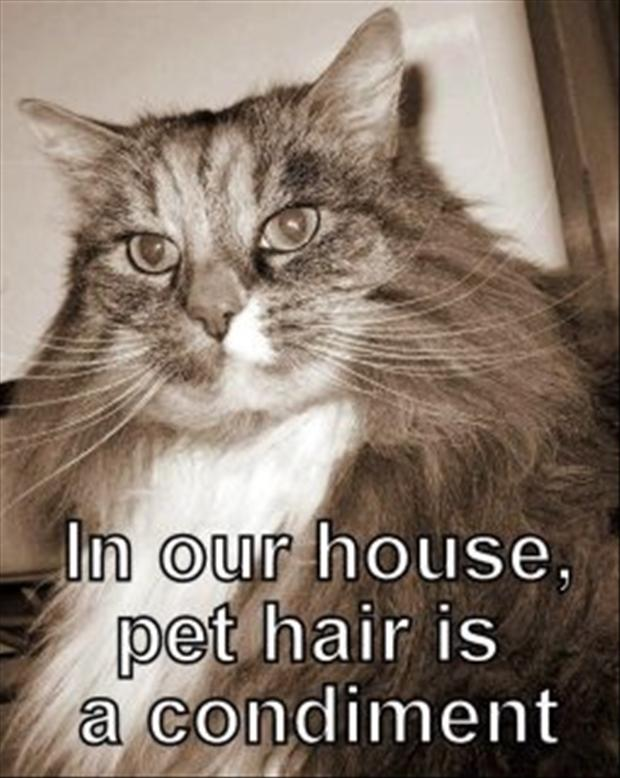 how to get rid of cat hair, funny cat hair pictures