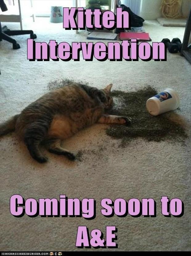 kitten intervention funny cat nip pictures