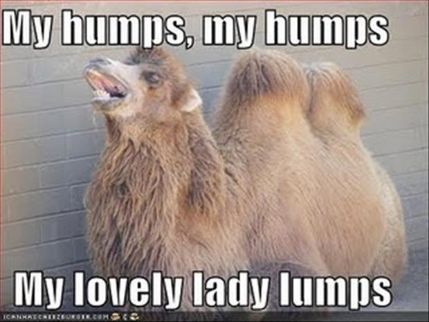 lady humps funny bumps