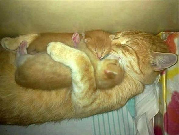 mommy cat sleeping with her kittens