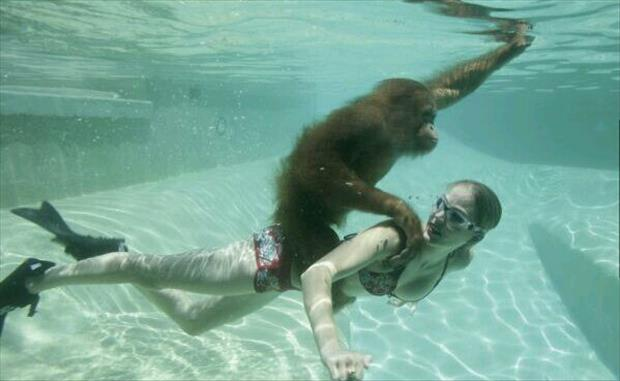 monkey-riding-human-underwater