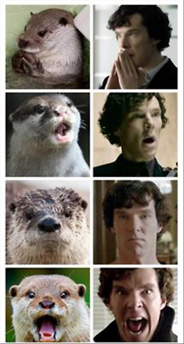otter and sherlock holmes