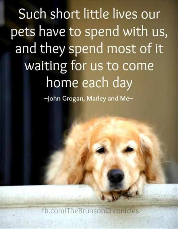 our pets wait for us to come home quotes - Dump A Day