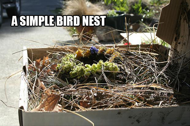 outdoor birds nest made from pizza boxes