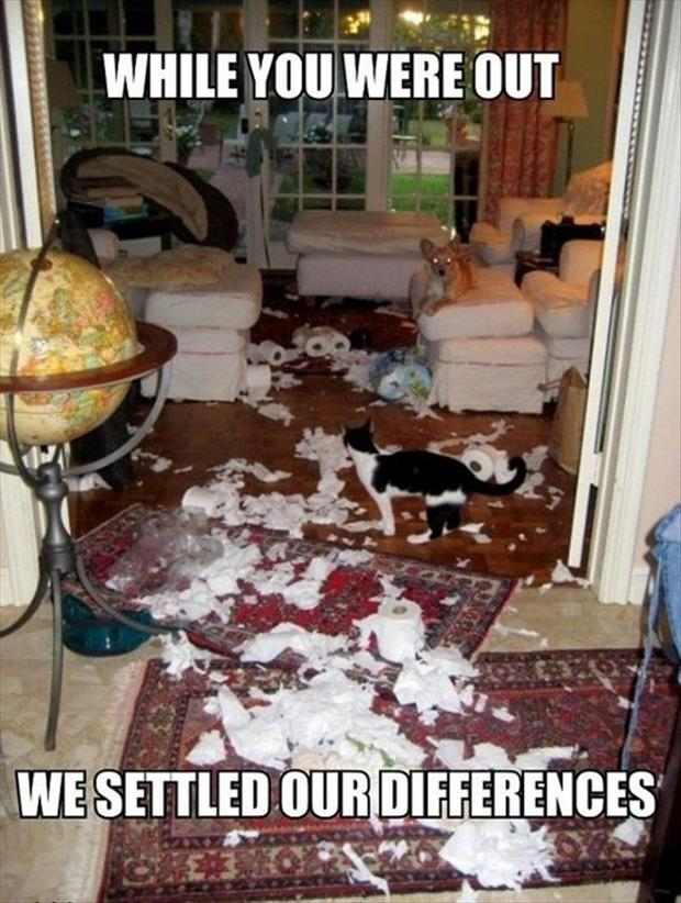 pets make a mess when you're gone