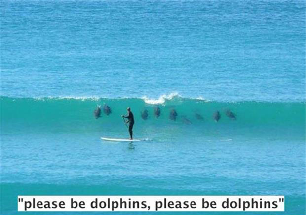 please be dolphins