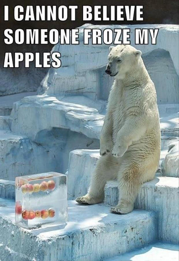 polar bear funny pictures