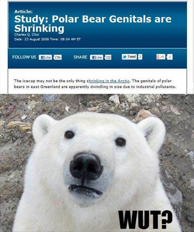 polar bear nuts are shrinking