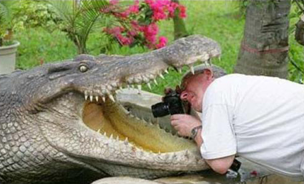 put head in alegators mouth funny pictures