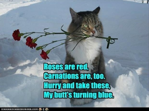 romantic cat poems