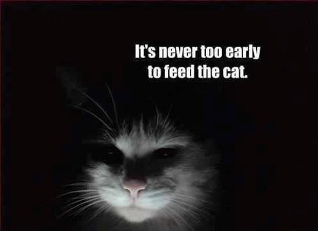 scary cat feed me