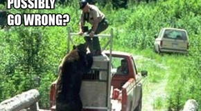 Set A Bear Free, What Could Possibly Go Wrong? – 10 Pics