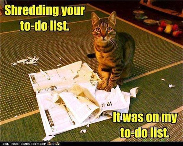 shredded things funny cats