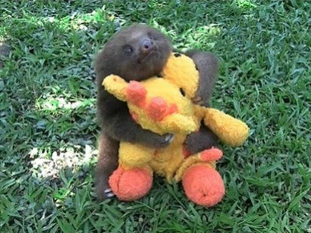 sloth playing with a toy