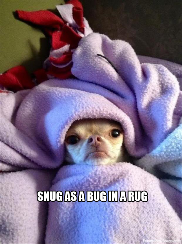 snug as a bug in a rug
