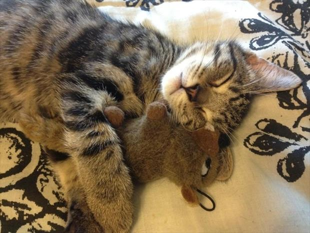stuffed animals and kitten