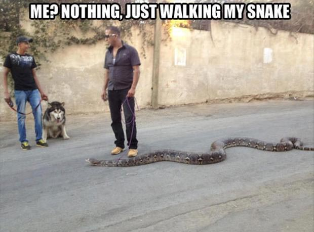 taking your snake for a walk