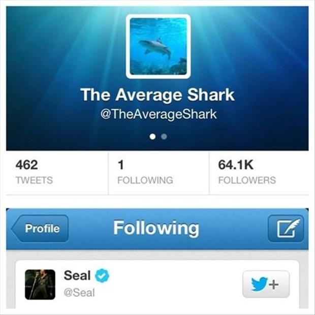 the average shark is following seal