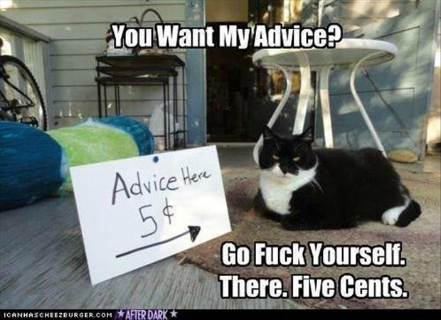 the cat gives advice for five cents