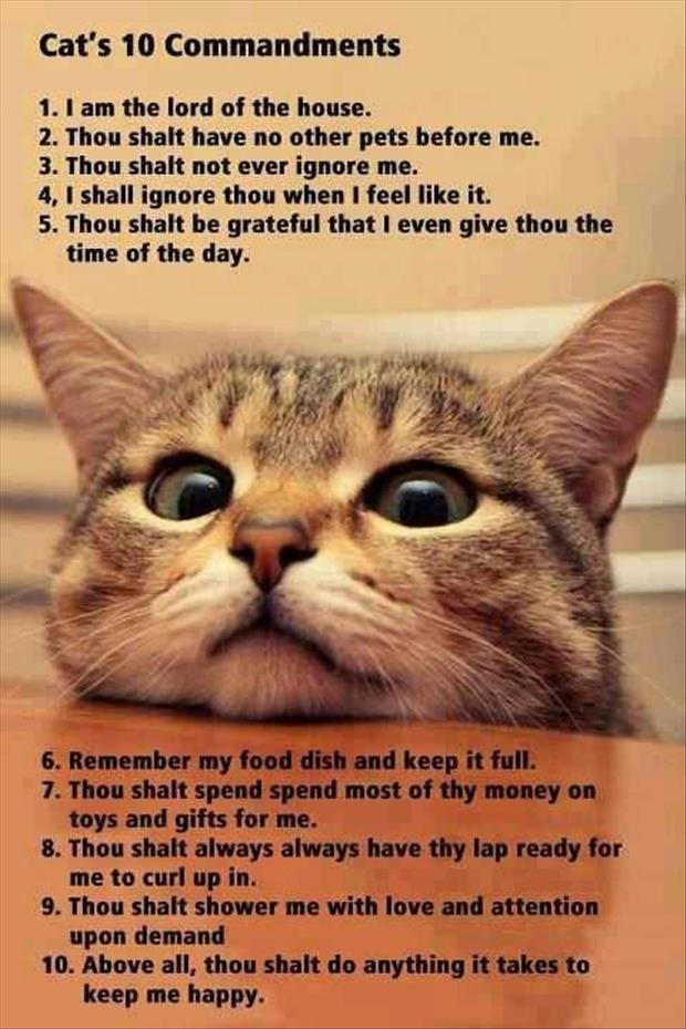 the cat's ten commandments
