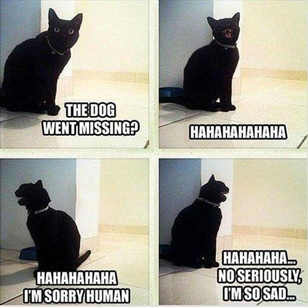 the dog went missing cat laughs